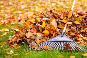 Spring and Fall yard cleanup
